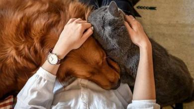 Фото Не курить, не будить. 7 ошибок, которые совершают хозяева домашних животных