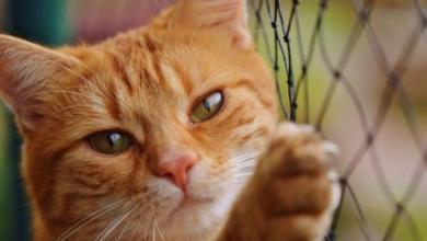 Photo of Россельхознадзор: китайцы массово скупают кошек и собак в РФ