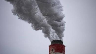 Фото В WWF рассказали, как россияне помогают природе