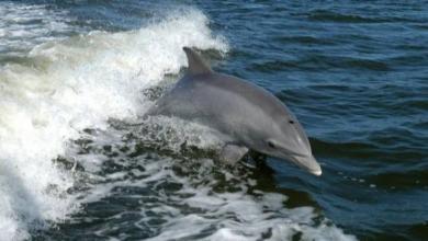 Фото На побережье Франции выброшены несколько сотен мертвых дельфинов