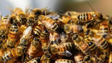 Фото В Московском зоопарке построили искусственное убежище для пчел и ос