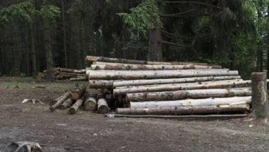 Photo of Власти Самары остановили вырубку рощи около храма