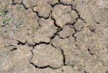 Фото Власти Намибии попросили Россию о гуманитарной помощи из-за засухи
