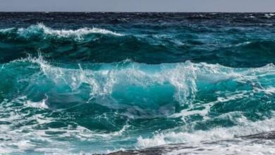 Фото На дне глубочайшей впадины Мирового океана нашли обертки от конфет