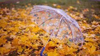 Photo of В Роскачестве рассказали, как выбрать хороший зонт