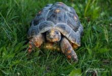 Photo of Более четырех тысяч черепах пытались ввезти в Россию, выдавая их за капусту
