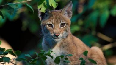 Фото Медведев утвердил список запрещенных для домашнего содержания животных