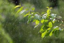 Фото Синоптики рассказали, когда в Москве кончатся дожди