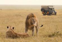 Фото Почувствуй себя королем саванны: как выиграть путешествие в Африку