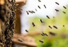 Фото Массовая гибель пчел зафиксирована в Тульской области