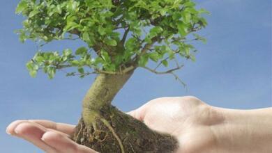 Photo of Не ругайтесь с фикусом, он ответит. Есть ли у растений зачатки разума?
