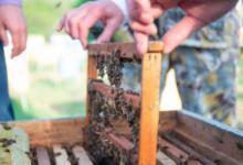Фото Массовую гибель пчел зафиксировали в Башкирии