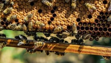 Фото На Алтае зафиксирована массовая гибель пчел