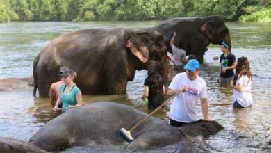 Фото Власти Ботсваны продали первые лицензии на отстрел слонов
