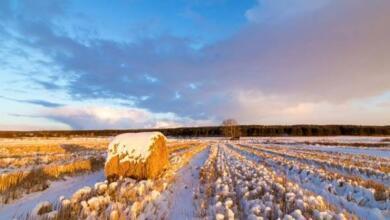 Фото Гололедица и до двух градусов мороза ожидаются в Москве 9 февраля