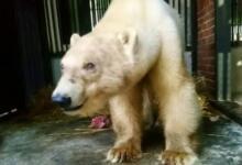Фото В России впервые пересчитают всех белых медведей