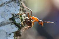 Фото Исчезнет треть видов. Земля стоит на пороге очередного массового вымирания
