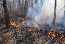 Фото Площадь лесных пожаров в России выросла до 1500 гектаров