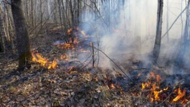 Photo of Площадь лесных пожаров в России выросла до 1500 гектаров