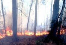Фото На Кубани зафиксирован новый лесной пожар