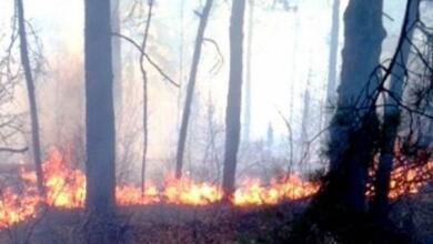 Photo of На Кубани зафиксирован новый лесной пожар