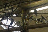 Фото Депутат МГД: Как живут звери и птицы в закрытых парках Москвы