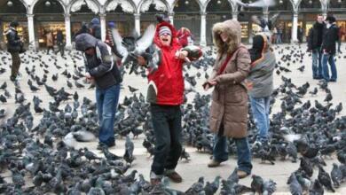 Фото Эксперты рассказали, как не допустить гнездования птиц в квартире