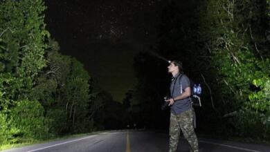 Фото За жука ответишь. Россиянин попал в тюрьму за сбор редких насекомых