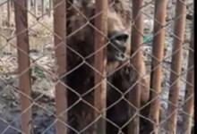 Фото В ижевском зоопарке погибла белая медведица