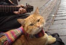 Фото В Великобритании начали собирать средства на памятник уличному коту Бобу
