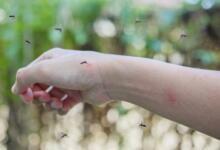 Фото Комариный бум. Пять важных фактов про кровососов