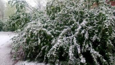 Фото В Гидрометцентре рассказали, будут ли в России бесснежные зимы
