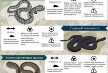 Фото В какое время года и дня змеи опаснее всего?