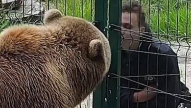 Photo of Зачем медведю Мансуру плюнули в морду?