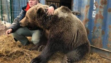 Фото Через вольер в душу. Подросток плюнул в морду доброму медведю Мансуру