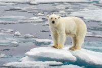 Фото Восстановление экосистем. В Арктике продолжается комплексный проект
