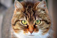 Фото Что за вакцину от коронавируса для кошек начали разрабатывать в России?