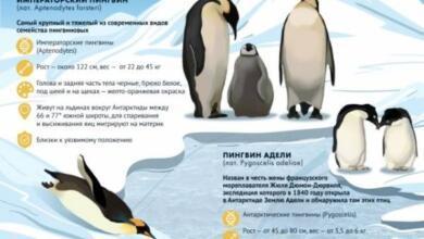 Photo of Кусто предсказал, что пингвины в Антарктиде скоро исчезнут