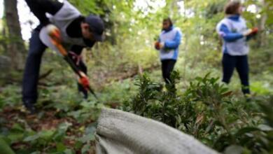 Фото Сохранение лесов России. Общественники о реализации федерального проекта