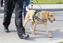 Фото В аэропорту Хельсинки собаки по запаху ищут пассажиров с коронавирусом