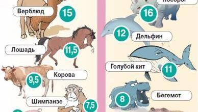 Фото Сколько длится беременность у животных? Инфографика