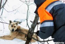 Фото Куда пожаловаться на бродячих собак?