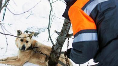 Photo of Куда пожаловаться на бродячих собак?