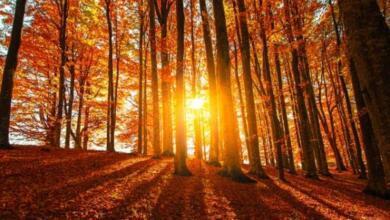 Фото Правительство РФ образовало комиссию по развитию лесного комплекса
