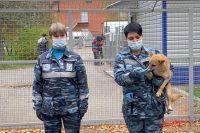 Фото Могут ли собаки принести коронавирус?