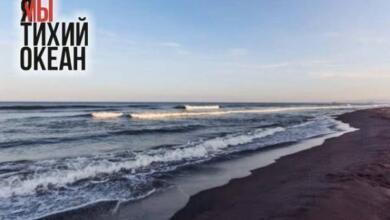 Фото СК расследует дело о загрязнении Авачинского залива и гибели животных