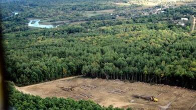 Фото Каких деревьев в России больше всего?