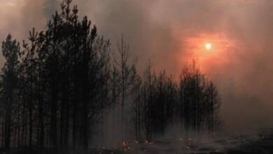 Фото Зиничев доложил Путину о ситуации с пожарами в Воронеже