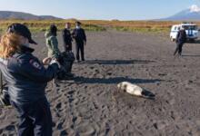 Фото К врачам после посещения Халактырского пляжа обратились восемь человек
